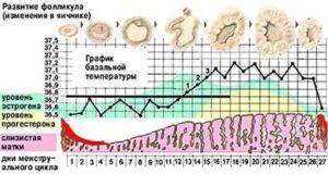 Менструация в 55 лет