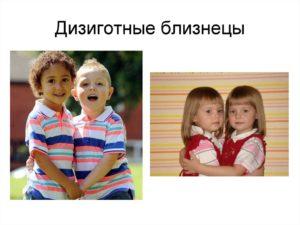 Монозиготные близнецы отличаются от дизиготных