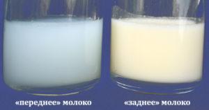 Почему грудное молоко стало соленым
