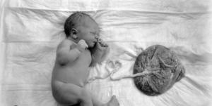 Как выглядит послед после родов у женщин