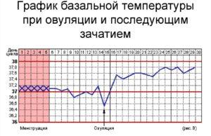 Какая температура должна быть при овуляции чтобы забеременеть