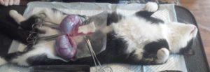 Почему нельзя во время беременности трогать кошек