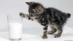 Корм для кошек Роял Канин (Royal Canin): отзывы, анализ