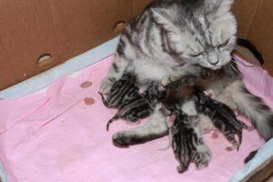 Когда у кошки начинают шевелится котята в животе