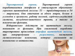 Тиротропин повышенный у женщин