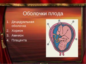 На какой неделе хорион превращается в плаценту