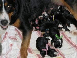 У собаки забрали щенков что делать с молоком