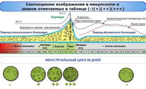 Определить овуляцию по слюне