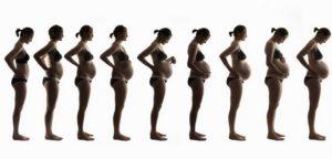 Когда при беременности становится виден живот при беременности