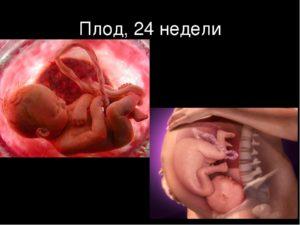 Беременность 25 недель как выглядит плод