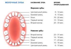 На какой неделе закладываются зубы