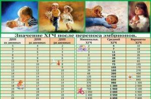 Хгч по дням после переноса эмбрионов двойня таблица