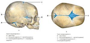 Сколько формируется череп у новорожденного