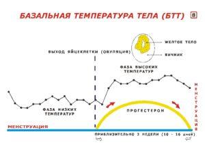 Почему после овуляции не поднимается базальная температура