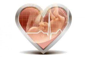 Сердцебиение девочки и мальчика в утробе