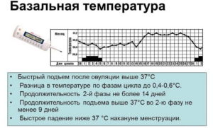 Не поднимается базальная температура