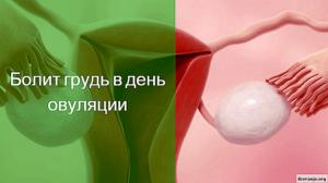 Болит грудь перед овуляцией