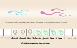 Как вести себя после овуляции для успешного зачатия