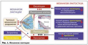 Как понять что прошел лактостаз