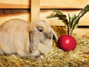 Можно ли кроликам свеклу