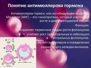 Антимюллеров гормон повышен форум