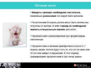 С какого возраста можно прикармливать котят и чем
