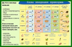 Прикорм когда вводить рыбу