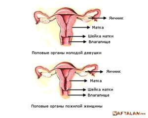 Инволютивные изменения матки и яичников что это такое