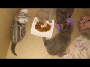 Прикорм котенка 1 месяц