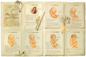 На какой неделе формируется пол ребенка в утробе