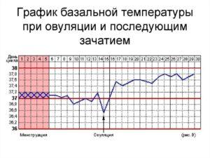 На какой день после зачатия повышается базальная температура