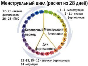 При 28 дневном цикле на какой день овуляция