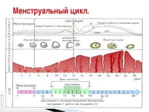 Как понять что овуляции не было в цикле
