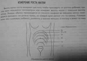 Размер матки на 6 неделе беременности в сантиметрах