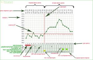 Может ли овуляция быть на 6 день цикла
