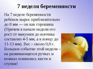 7 эмбриональная неделя беременности
