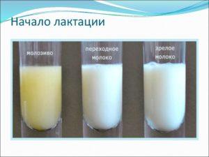 Сколько перегорает молоко после отлучения