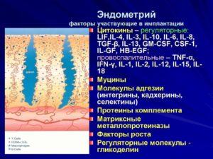 Минимальный эндометрий для имплантации
