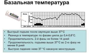 После овуляции температура 37