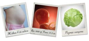 Ребенок в 28 недель беременности размеры плода