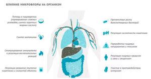 Как антибиотики влияют на кишечник