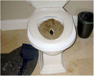 Нет позывов в туалет по большому после родов