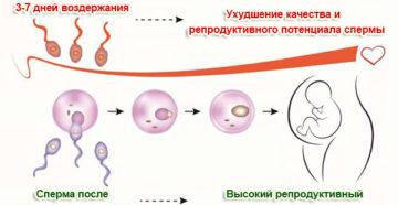 Сколько воздерживаться перед зачатием мужчине